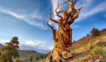 Làm thế nào để xác định tuổi của cây?