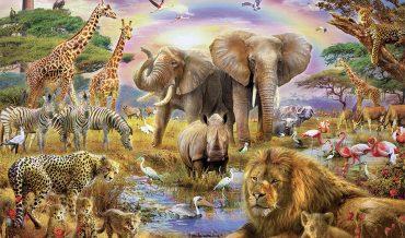 Những điều thú vị bạn chưa biết về động vật?