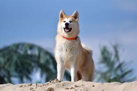 Tại sao chó được xem là động vật trung thành nhất với con người.?