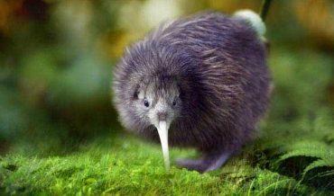 10 Loài Chim Không Bay Đáng Yêu Nhất Thế Giới